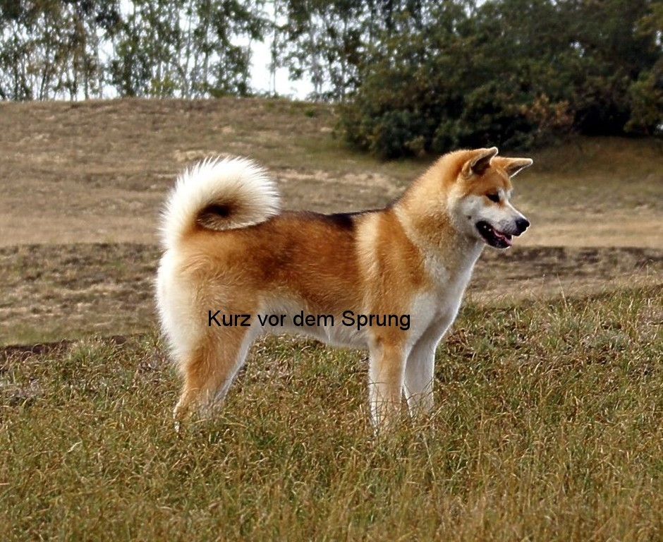 treue hunderassen